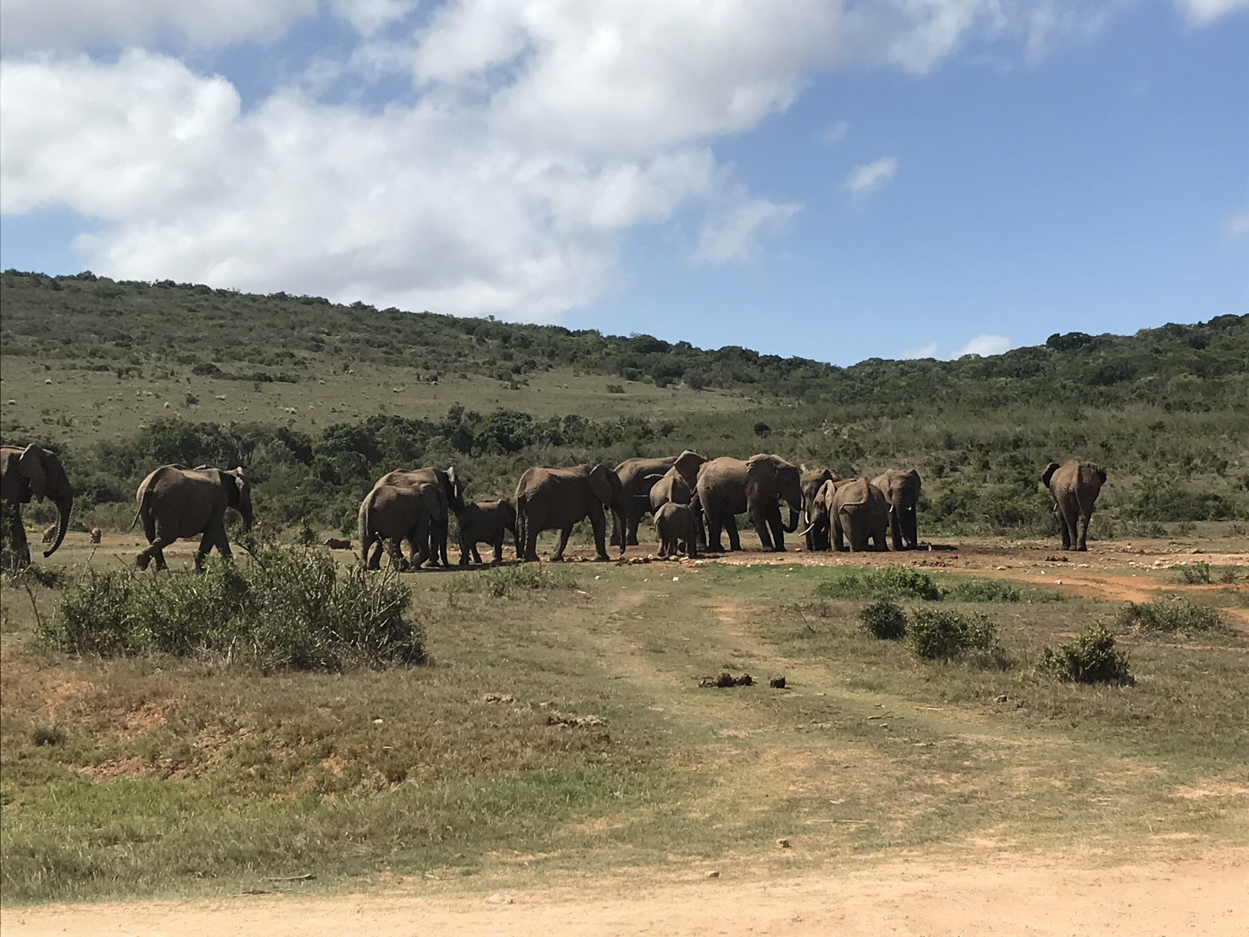 Meerkat manor en Addo Elephant national park