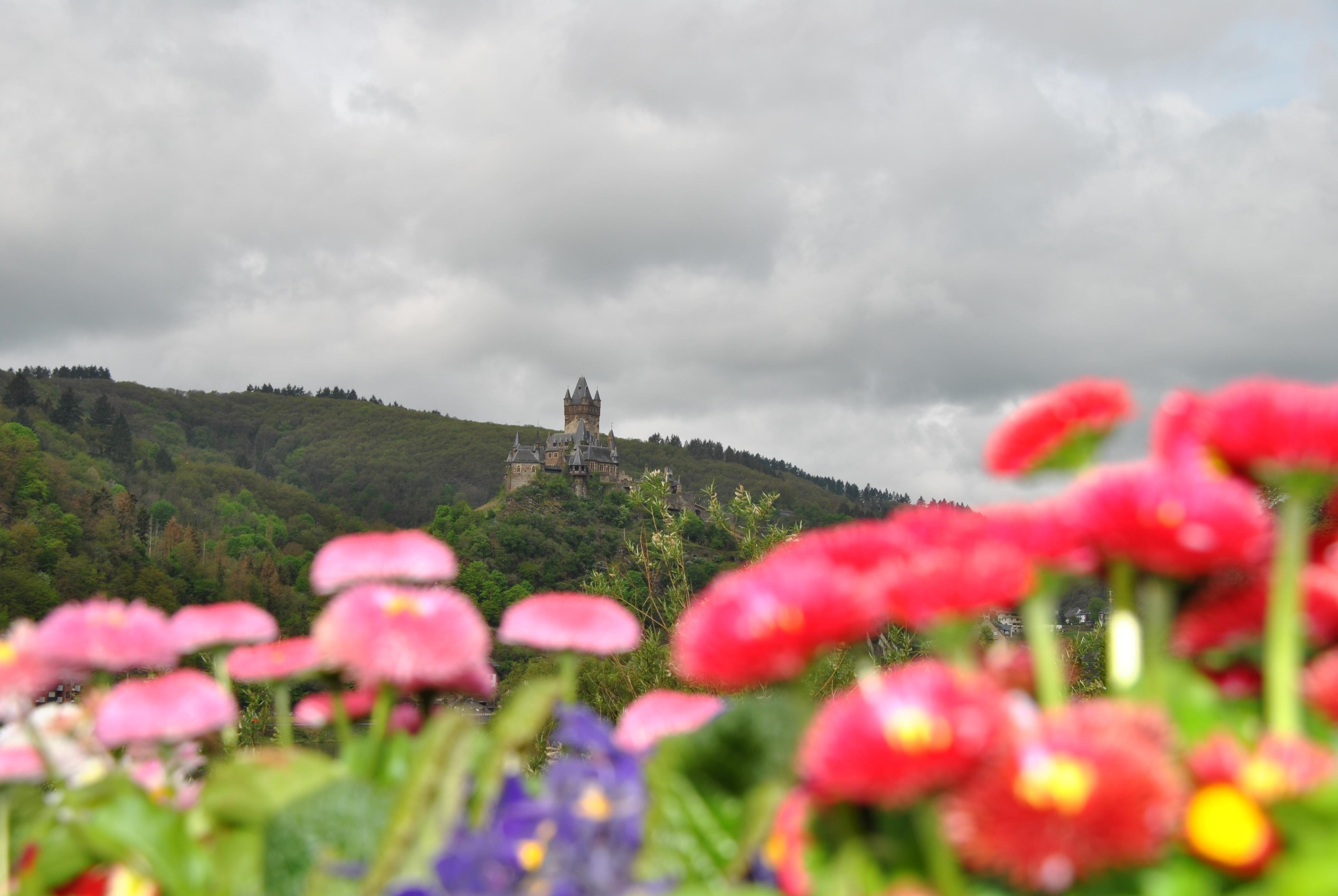 Overnachten in de Moezel regio bij Schloss hotel Petry, Treis-Karden